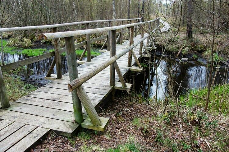photo, image, sentier des tourbières, parc, nomme, tallinn, estonie